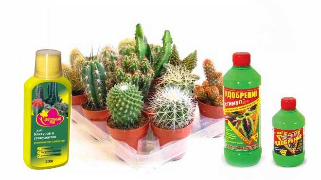 Удобрения для на фоне кактусов