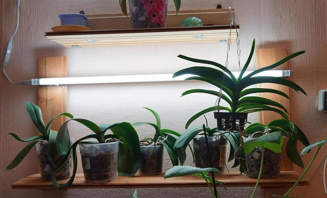 Дополнительное освещение орхидеи