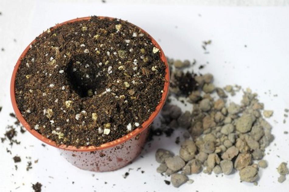 Подготовка почвы для фиалок